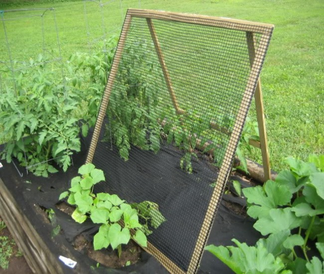 Building Trellises for Cucumbers Enhances Growth!