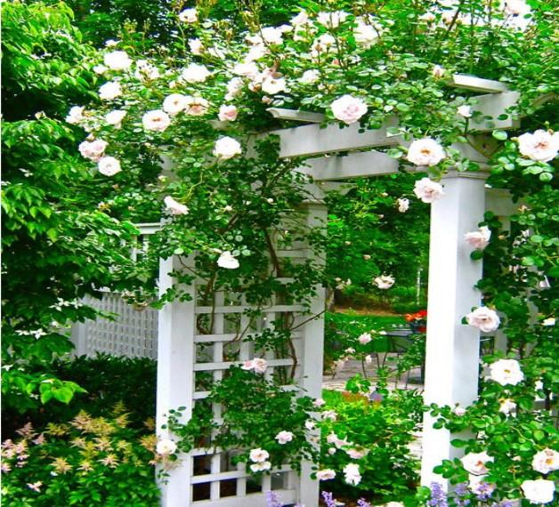 Garden Arbors Designs 3