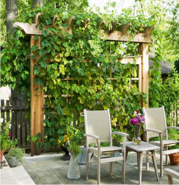 Outdoor Trellis Designs 1