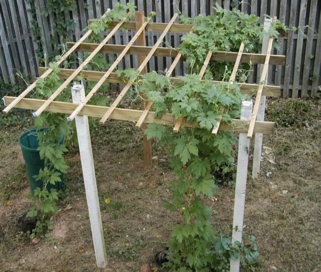 Building Trellises for Cucumbers 5
