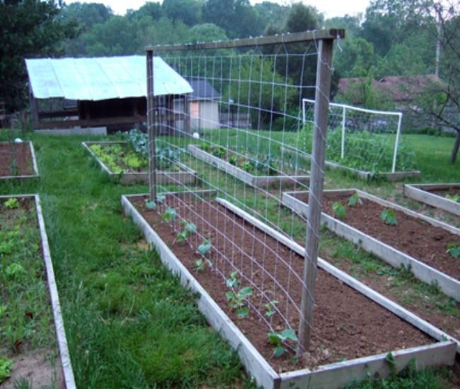 Building Trellises for Cucumbers 6