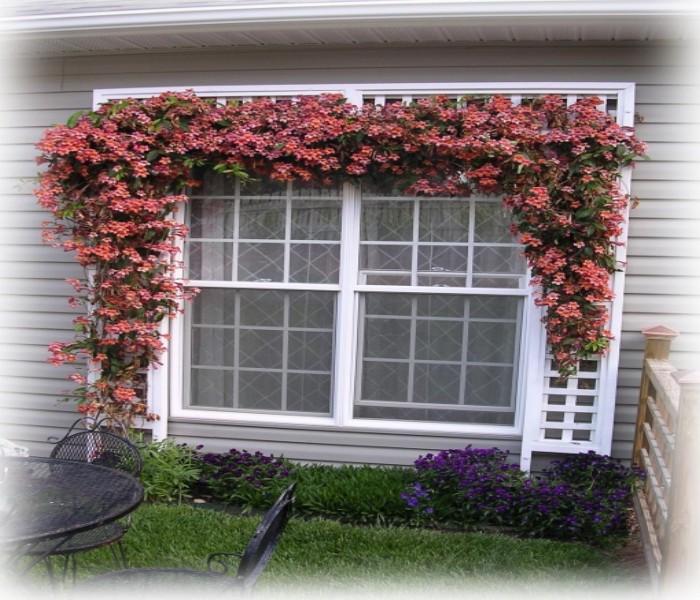 Trellis Over Window Designs 4