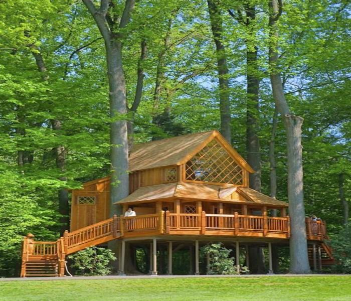 Gazebo Tree House 1