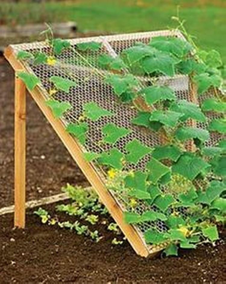 Trellis Ideas for Garden 6