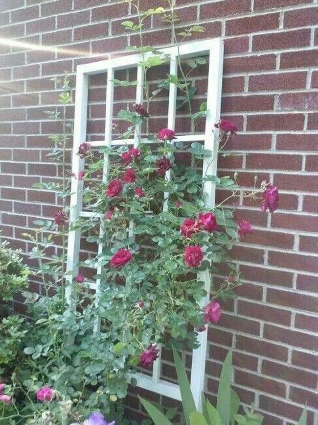 Old Windows For Making Trellises 6