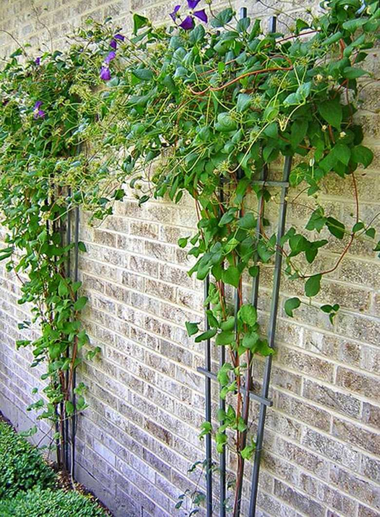 Trellis Design Ideas 26